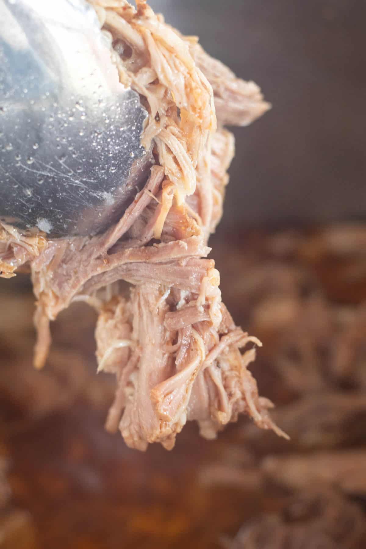 holding up shredded carnitas